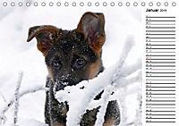 Schäferhund Yack wird erwachsenCH-Version (Tischkalender 2019 DIN A5 quer) - Produktdetailbild 1