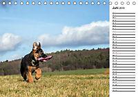 Schäferhund Yack wird erwachsenCH-Version (Tischkalender 2019 DIN A5 quer) - Produktdetailbild 6