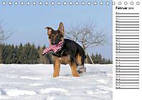 Schäferhund Yack wird erwachsenCH-Version (Tischkalender 2019 DIN A5 quer) - Produktdetailbild 2