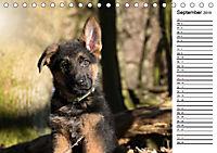 Schäferhund Yack wird erwachsenCH-Version (Tischkalender 2019 DIN A5 quer) - Produktdetailbild 9