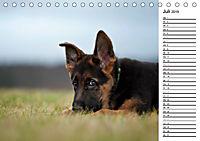 Schäferhund Yack wird erwachsenCH-Version (Tischkalender 2019 DIN A5 quer) - Produktdetailbild 7
