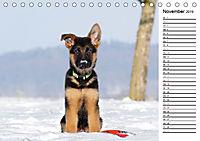 Schäferhund Yack wird erwachsenCH-Version (Tischkalender 2019 DIN A5 quer) - Produktdetailbild 11