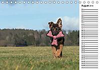 Schäferhund Yack wird erwachsenCH-Version (Tischkalender 2019 DIN A5 quer) - Produktdetailbild 8