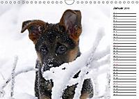 Schäferhund Yack wird erwachsenCH-Version (Wandkalender 2019 DIN A4 quer) - Produktdetailbild 1