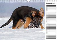 Schäferhund Yack wird erwachsenCH-Version (Wandkalender 2019 DIN A4 quer) - Produktdetailbild 12