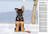 Schäferhund Yack wird erwachsenCH-Version (Wandkalender 2019 DIN A4 quer) - Produktdetailbild 11