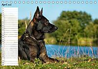 Schäferhunde SeelenhundeCH-Version (Tischkalender 2019 DIN A5 quer) - Produktdetailbild 4