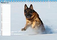 Schäferhunde SeelenhundeCH-Version (Tischkalender 2019 DIN A5 quer) - Produktdetailbild 2