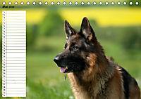 Schäferhunde SeelenhundeCH-Version (Tischkalender 2019 DIN A5 quer) - Produktdetailbild 5