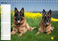 Schäferhunde SeelenhundeCH-Version (Tischkalender 2019 DIN A5 quer) - Produktdetailbild 3
