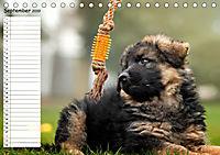 Schäferhunde SeelenhundeCH-Version (Tischkalender 2019 DIN A5 quer) - Produktdetailbild 9