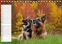 Schäferhunde SeelenhundeCH-Version (Tischkalender 2019 DIN A5 quer) - Produktdetailbild 11
