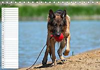 Schäferhunde SeelenhundeCH-Version (Tischkalender 2019 DIN A5 quer) - Produktdetailbild 7