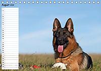 Schäferhunde SeelenhundeCH-Version (Tischkalender 2019 DIN A5 quer) - Produktdetailbild 8