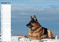 Schäferhunde SeelenhundeCH-Version (Tischkalender 2019 DIN A5 quer) - Produktdetailbild 12