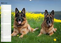 Schäferhunde SeelenhundeCH-Version (Wandkalender 2019 DIN A2 quer) - Produktdetailbild 3