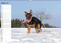 Schäferhunde SeelenhundeCH-Version (Wandkalender 2019 DIN A2 quer) - Produktdetailbild 1