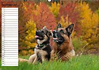 Schäferhunde SeelenhundeCH-Version (Wandkalender 2019 DIN A2 quer) - Produktdetailbild 11