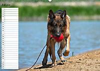 Schäferhunde SeelenhundeCH-Version (Wandkalender 2019 DIN A2 quer) - Produktdetailbild 7