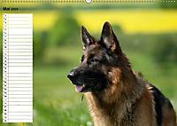 Schäferhunde SeelenhundeCH-Version (Wandkalender 2019 DIN A2 quer) - Produktdetailbild 5