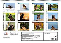 Schäferhunde SeelenhundeCH-Version (Wandkalender 2019 DIN A2 quer) - Produktdetailbild 13