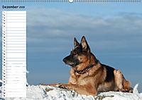 Schäferhunde SeelenhundeCH-Version (Wandkalender 2019 DIN A2 quer) - Produktdetailbild 12