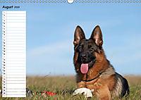 Schäferhunde SeelenhundeCH-Version (Wandkalender 2019 DIN A3 quer) - Produktdetailbild 8