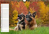 Schäferhunde SeelenhundeCH-Version (Wandkalender 2019 DIN A4 quer) - Produktdetailbild 11