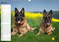 Schäferhunde SeelenhundeCH-Version (Wandkalender 2019 DIN A3 quer) - Produktdetailbild 3
