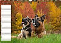 Schäferhunde SeelenhundeCH-Version (Wandkalender 2019 DIN A3 quer) - Produktdetailbild 11
