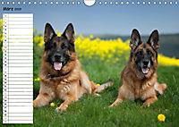 Schäferhunde SeelenhundeCH-Version (Wandkalender 2019 DIN A4 quer) - Produktdetailbild 3