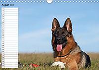 Schäferhunde SeelenhundeCH-Version (Wandkalender 2019 DIN A4 quer) - Produktdetailbild 8