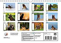 Schäferhunde SeelenhundeCH-Version (Wandkalender 2019 DIN A4 quer) - Produktdetailbild 13