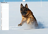 Schäferhunde SeelenhundeCH-Version (Wandkalender 2019 DIN A4 quer) - Produktdetailbild 2
