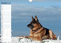 Schäferhunde SeelenhundeCH-Version (Wandkalender 2019 DIN A4 quer) - Produktdetailbild 12