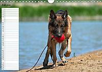Schäferhunde SeelenhundeCH-Version (Wandkalender 2019 DIN A4 quer) - Produktdetailbild 7