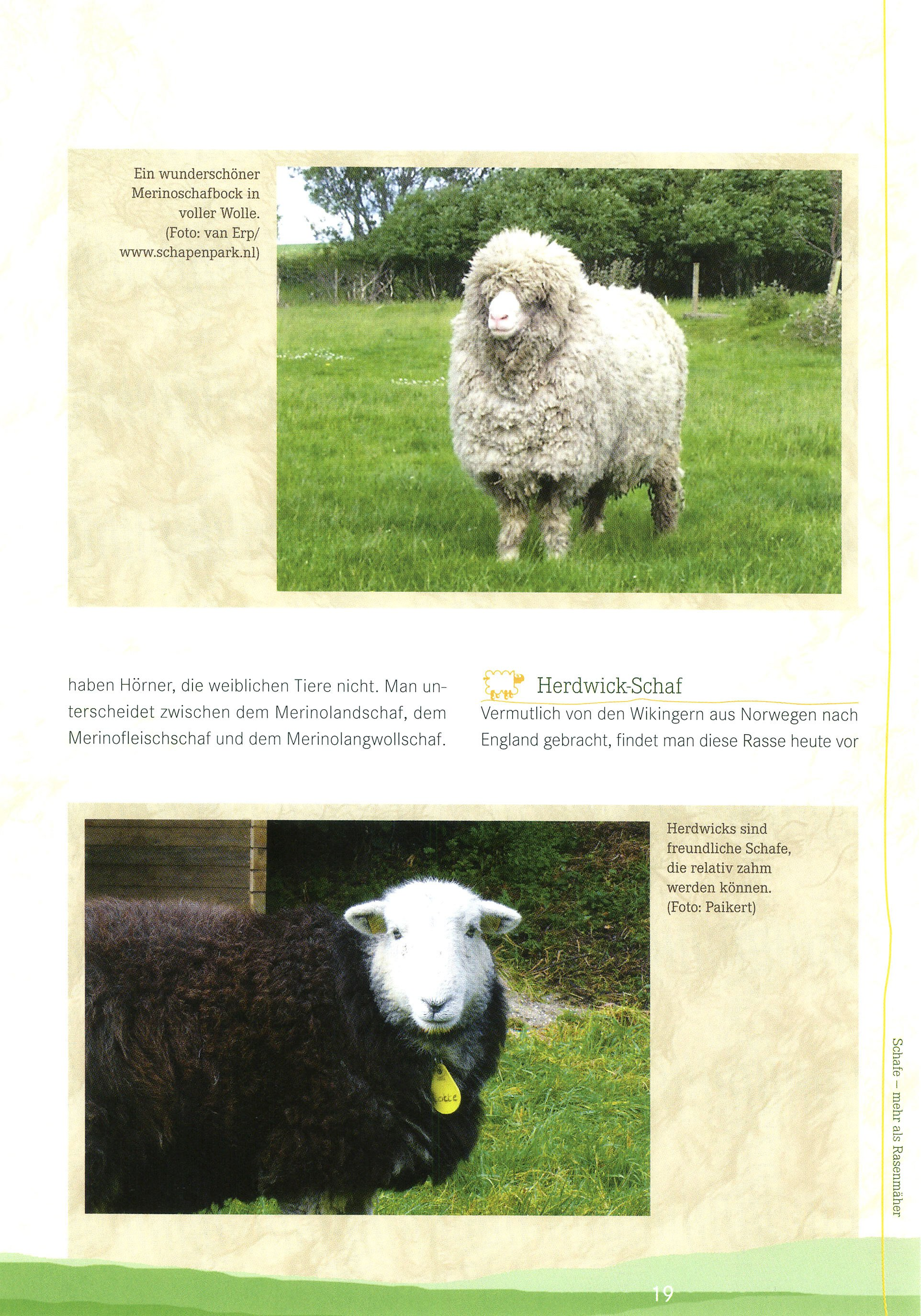 Schafe buch von dorothee dahl versandkostenfrei bei for Schafe halten im garten
