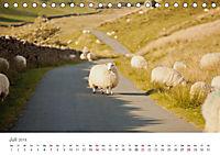 Schafe - Weich und wollig (Tischkalender 2019 DIN A5 quer) - Produktdetailbild 7