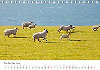 Schafe - Weich und wollig (Tischkalender 2019 DIN A5 quer) - Produktdetailbild 9