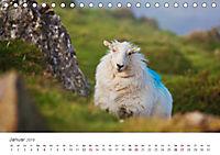 Schafe - Weich und wollig (Tischkalender 2019 DIN A5 quer) - Produktdetailbild 1