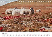 Schafe - Weich und wollig (Tischkalender 2019 DIN A5 quer) - Produktdetailbild 5