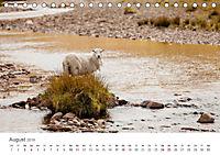 Schafe - Weich und wollig (Tischkalender 2019 DIN A5 quer) - Produktdetailbild 8