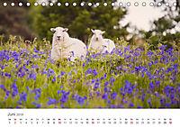 Schafe - Weich und wollig (Tischkalender 2019 DIN A5 quer) - Produktdetailbild 6