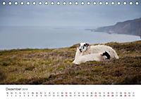 Schafe - Weich und wollig (Tischkalender 2019 DIN A5 quer) - Produktdetailbild 12