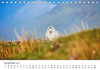 Schafe - Weich und wollig (Tischkalender 2019 DIN A5 quer) - Produktdetailbild 11