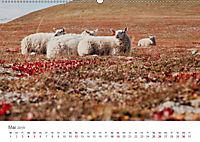 Schafe - Weich und wollig (Wandkalender 2019 DIN A2 quer) - Produktdetailbild 5
