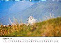 Schafe - Weich und wollig (Wandkalender 2019 DIN A2 quer) - Produktdetailbild 11