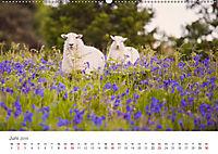 Schafe - Weich und wollig (Wandkalender 2019 DIN A2 quer) - Produktdetailbild 6