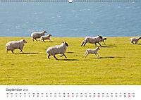 Schafe - Weich und wollig (Wandkalender 2019 DIN A2 quer) - Produktdetailbild 9