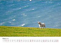 Schafe - Weich und wollig (Wandkalender 2019 DIN A2 quer) - Produktdetailbild 3